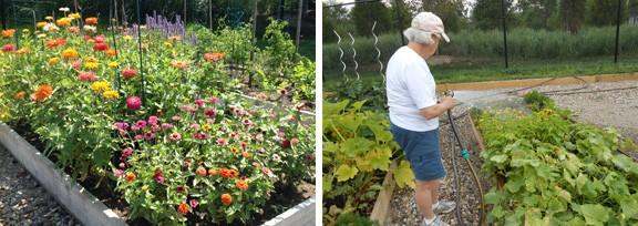 flowers-sfc-garden